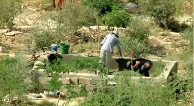 La permaculture permet de cultiver le désert